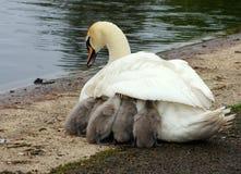 Moders värme Fotografering för Bildbyråer