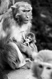 Moderskap Royaltyfria Foton