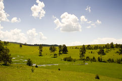Modes de montagne de Zlatibor Images libres de droits