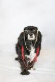 Modieuze Bejaarde Hond Stock Foto's