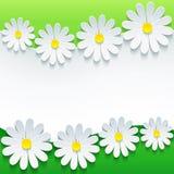 Modieuze bloemenachtergrond, 3d bloemkamille Stock Afbeelding