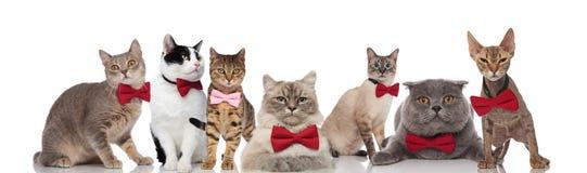 Modieuze groep die katten rode en roze bowties draagt stock foto