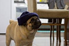 Modieuze pug Royalty-vrije Stock Foto's