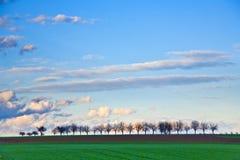 Modific il terrenoare con gli acri, gli alberi e le nubi scure Fotografia Stock Libera da Diritti