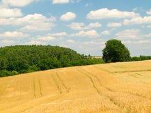 Modific il terrenoare con il campo della segale, la foresta, backgroun del cielo Fotografia Stock Libera da Diritti