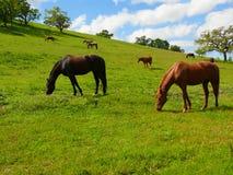 Modific il terrenoare con il pascolo dei cavalli Fotografia Stock