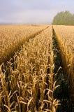 Modific il terrenoare con la foschia del campo di frumento e dell'estremità di estate Immagini Stock Libere da Diritti