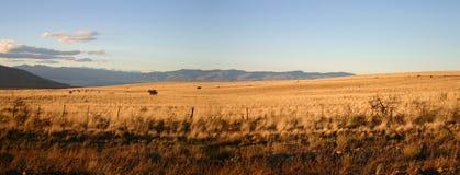 Modific il terrenoare nel patagonia Fotografia Stock