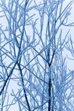 Modific il terrenoare un albero di inverno con le filiali Fotografia Stock