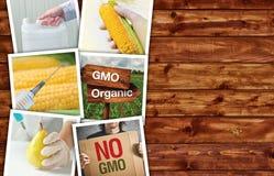 Modifica genetica, scienza e tecnologia nel agriculturre, pH Fotografia Stock Libera da Diritti