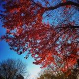 Modification des saisons Photo libre de droits
