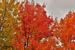 Modification des saisons Image libre de droits