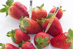 Modified food concept / strawberries with punched needles and syringes / isolated background. Modified food concept / strawberries with punched needles and Stock Photo