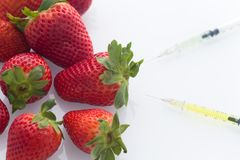 Modified food concept / strawberries with punched needles and syringes. / isolated background Royalty Free Stock Photography