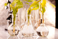 Modifying genes of plants Stock Photography
