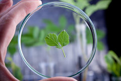 Modifying genes of plants Royalty Free Stock Photo