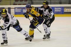 modig hockey för uppgift Fotografering för Bildbyråer