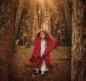 Modig liten röd Reding huv i skog Royaltyfri Foto