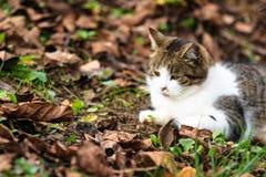 modig mus för katt Arkivfoto