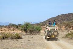 modig savannamedelvisning Royaltyfri Foto