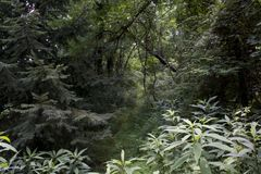 Modig slinga till och med skog royaltyfri foto