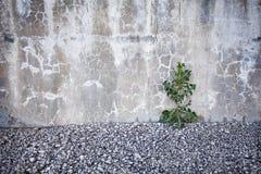 Modig växt Arkivbilder