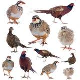 Modiga fåglar Arkivfoto