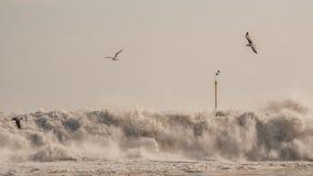 Modiga vågor över vaggar arkivbilder