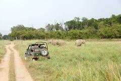 Modigt drev i den Dhikala grässlätten på Jim Corbett Fotografering för Bildbyråer