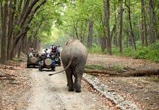 Modigt drev på den Dhikala skogen av Jim Corbett Fotografering för Bildbyråer