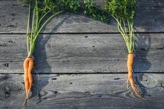 Modische hässliche organische Babykarotte vom Hausgarten Lizenzfreies Stockfoto