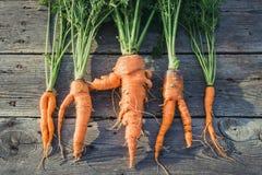 Modische hässliche organische Karotte Stockfoto
