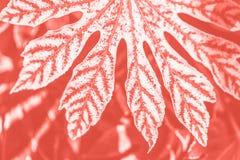 Modische lebende korallenrote Farbe-fatsia Blätter lizenzfreie abbildung