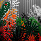 Modische Mehrfarbenpalme, tropische exotische Blätter auf einem grauen Hintergrund Botanische Illustration des Vektors, Elemente  Stockbild
