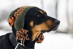 Modischer Hund Stockfotos