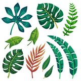 Modischer Sommer-tropisches Blatt-Vektor-Design auf weißem Hintergrund lizenzfreie abbildung