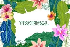 Modischer tropischer Hintergrund mit Bananenblättern und -hibiscus blüht Lizenzfreie Stockfotos