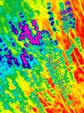 Modisches Entwurfs-, Natur- und Hintergrundkonzept glühenden Neoneffekt duotone in den Blumen auf den Lavendelgebieten in der Pro lizenzfreie stockbilder