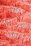Modisches lebendes korallenrotes Farbkonzept des Jahres stockfotos