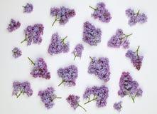Modèle de fleurs lilas sur le fond blanc Images stock
