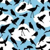 Modèle sans couture avec des oiseaux de silhouettes sur le fond de ciel Images stock