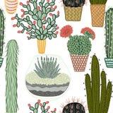Modèle sans couture avec les plantes et les cactus succulents dans des pots Ensemble botanique de graphique de vecteur Image stock
