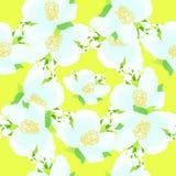 Modèle sans couture - grille avec le jasmin sur un vect jaune de fond Photo stock