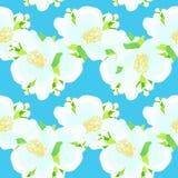 Modèle sans couture - zigzag avec le jasmin sur un fond bleu Vec Photo libre de droits