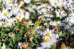 Modlenie modliszka na kwiacie fotografia royalty free