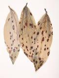 Modèles sur les feuilles sèches Photographie stock libre de droits