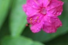 Modne kwiatu i wody krople zdjęcia stock