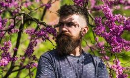 Modniś cieszy się wiosnę blisko fiołkowego okwitnięcia Brodaty mężczyzna z świeżym ostrzyżeniem pozuje z kwiatem judas drzewo myd Zdjęcia Royalty Free