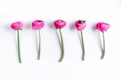 Modny projekt z kwiatu wzorem na białym tło odgórnego widoku egzaminie próbnym up zdjęcia royalty free