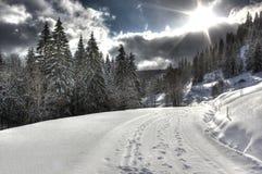 Modo alla montagna di Feldberg, foresta nera Fotografia Stock